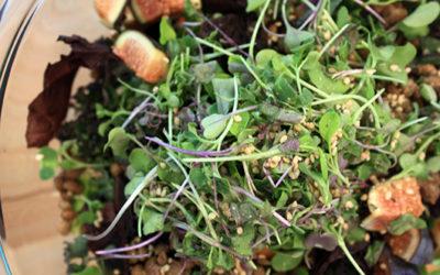 Yummy Fall Ingredients: Fig, Lentil & Purple Basil Salad